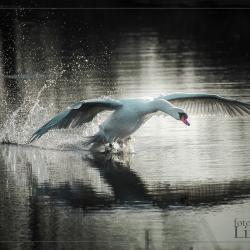 © Ruud - Zachte Landing